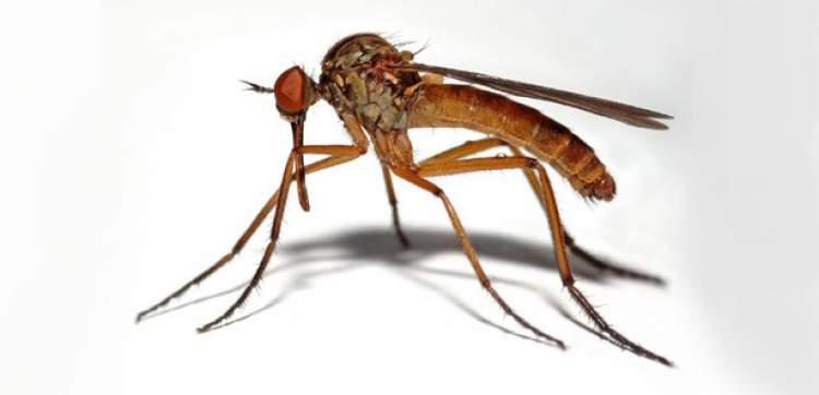 Rüya Yorumu: Sivrisineklerin hayalleri