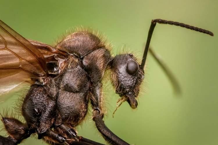 tuvalette kara böcek görmek