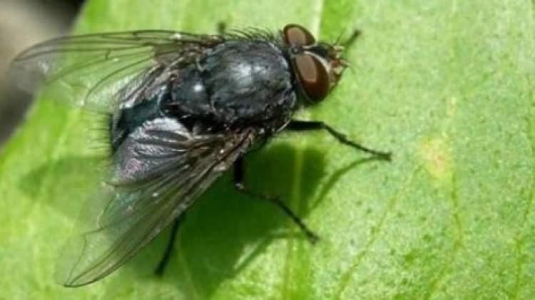 uçan böcek kovalamak