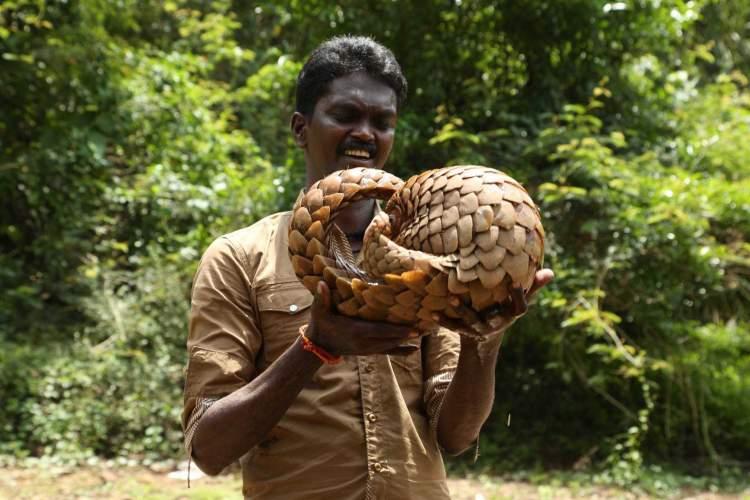 yılan elinde tutmak