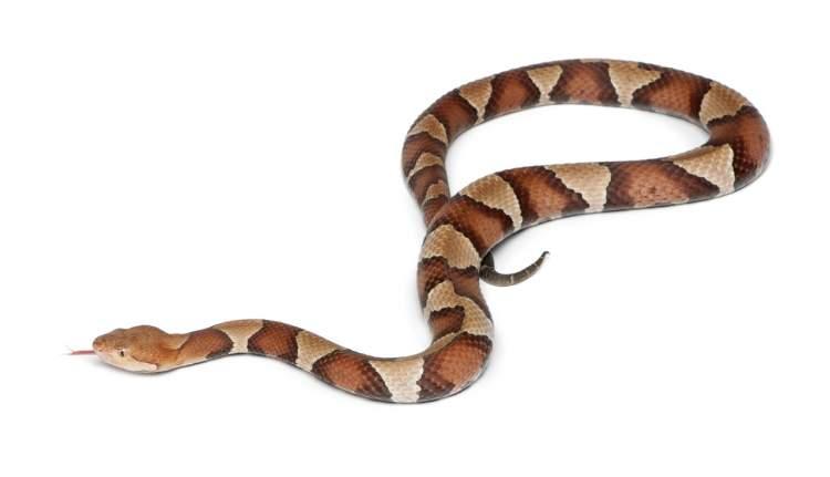 yılanı elinde tutmak