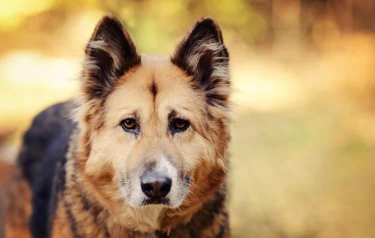 köpeğe ciğer vermek