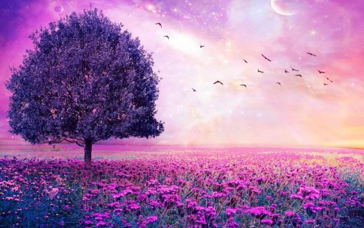 mor çiçekli ağaç görmek