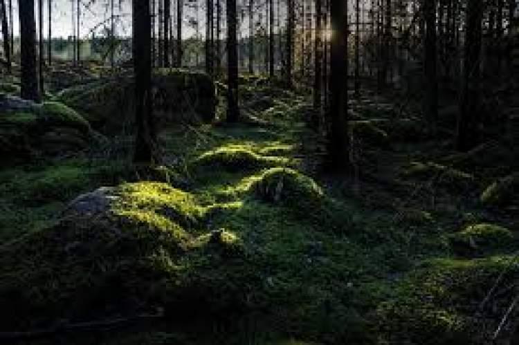 yeşil manzara görmek